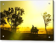 Silhouetted Cattle Muster At Sunset, Armraynald Station Acrylic Print by Johnny Haglund