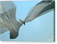 Silk Wings Acrylic Print
