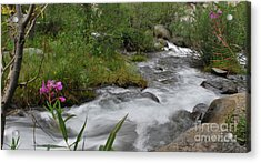 Acrylic Print featuring the photograph Silky Smooth by Johanne Peale
