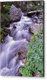 Silky Stream Acrylic Print