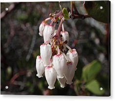 Silver Bells Acrylic Print by