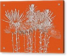 Silver Stems Acrylic Print by James Mancini Heath