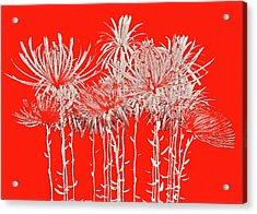 Silver Stems On Red Acrylic Print by James Mancini Heath