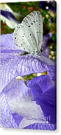 Silver Acrylic Print by Susan Fisher
