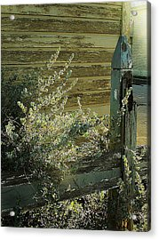 Acrylic Print featuring the photograph Silverleaf In Morning Sun by Louis Nugent