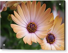 Simple Beauty Acrylic Print by Michael Krahl