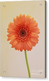 Simple Pleasures Acrylic Print by Inspired Nature Photography Fine Art Photography
