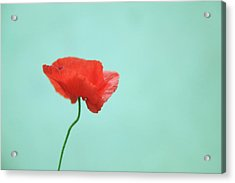 Simple Red Poppy On Turquoise Blue Acrylic Print by Poppy Thomas-Hill