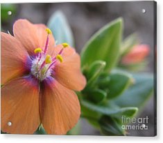 Acrylic Print featuring the photograph Simplistic Photography by Tina Marie