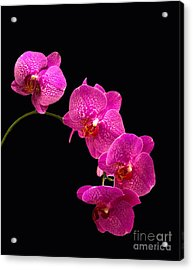 Simply Beautiful Purple Orchids Acrylic Print
