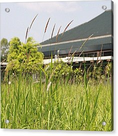 Simply Grass Under The Focus Of The Acrylic Print