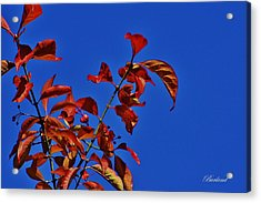 Simply Red Acrylic Print
