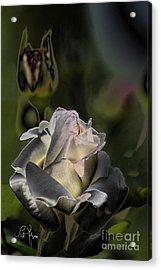 Sinful Rose Acrylic Print by Leo Symon