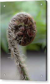 Acrylic Print featuring the photograph Single Frond by Carole Hinding