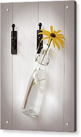 Single Rudbeckia Flower Acrylic Print by Amanda Elwell
