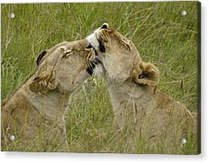 Sisterly Love Acrylic Print by Michele Burgess