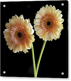 Sisters. Acrylic Print by Terence Davis