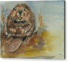 Sitting Beaver Acrylic Print