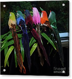 Six Long-tailed Colorful Birds On A Bamboo Leaf Acrylic Print