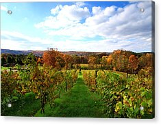 Six Miles Creek Vineyard Acrylic Print by Paul Ge