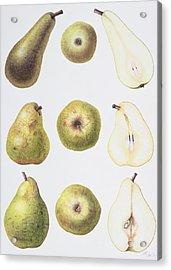 Six Pears Acrylic Print by Margaret Ann Eden