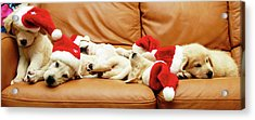 Six Puppies Sleep On Sofa, Some Wear Santa Hats Acrylic Print by Karina Santos