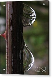 Sizable Acrylic Print by Tina Marie