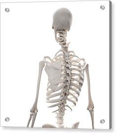 Skeleton, Artwork Acrylic Print by Andrzej Wojcicki