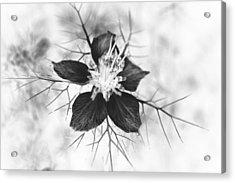 Skeleton Flower Acrylic Print by Michael Ambrose