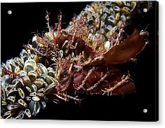 Skeleton Shrimp And Mussels Acrylic Print by Alexander Semenov