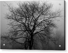 Skeletons In The Fog Acrylic Print