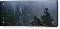 Skeletons In The Mist Acrylic Print