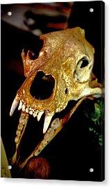 Skull In The Dark Acrylic Print by Swainson Holness