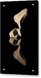 Skull Of Wy Acrylic Print