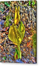 Skunk Cabbage - 2 Acrylic Print by Rod Wiens