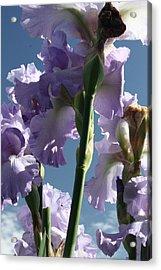 Sky And Flowers Acrylic Print