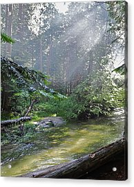 Acrylic Print featuring the photograph Slanting Sunlight On River by Kirsten Giving