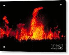 Slash And Burn Agriculture Acrylic Print by Dante Fenolio