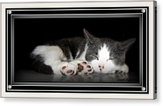 Acrylic Print featuring the photograph Sleeping Beauty by Danielle  Parent