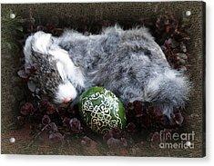Sleeping Easter Bunny Acrylic Print by Danuta Bennett