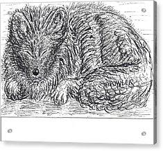Sleepy Fox Acrylic Print by John A Fowler
