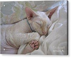 Sleepy Kitty Acrylic Print by Glennis Siverson