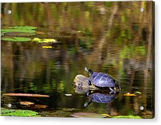 Slider In The Sun Acrylic Print by Mary Zeman