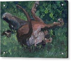 Sliding In Acrylic Print