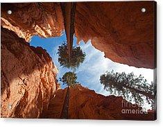 Slot Canyon Acrylic Print by Greg Dimijian