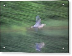 Slow Evening Shutter Acrylic Print