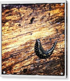 Slug On A Paddle Acrylic Print