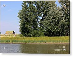 Small Barn Big Trees Acrylic Print by Sophie Vigneault