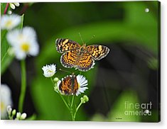 Small Butterfly Acrylic Print