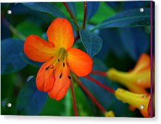 Acrylic Print featuring the photograph Small Orange Flower by Tikvah's Hope